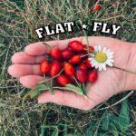 Flat Fly / Klub č.p. 4 Hradec Králové
